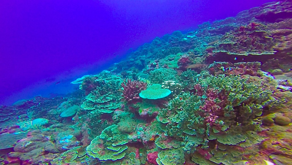 an image of the coral reef (taken at about 45')