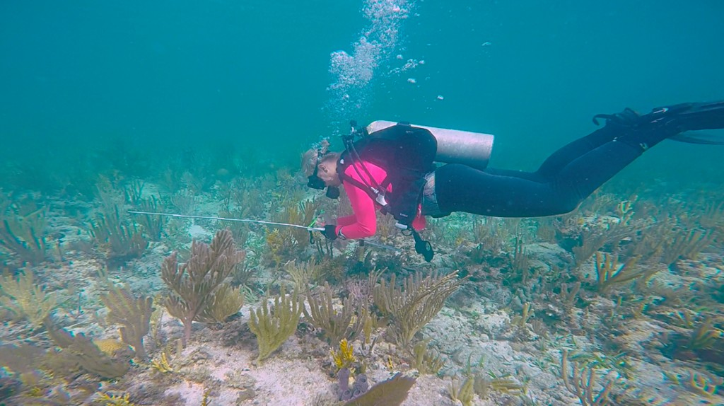 After an anomaly is found, it must be thoroughly documented. Aside from drawings and photographs, measurements must be recorded as well. Here Maddie prepares to take the length and width of an anomaly found amongst soft coral.