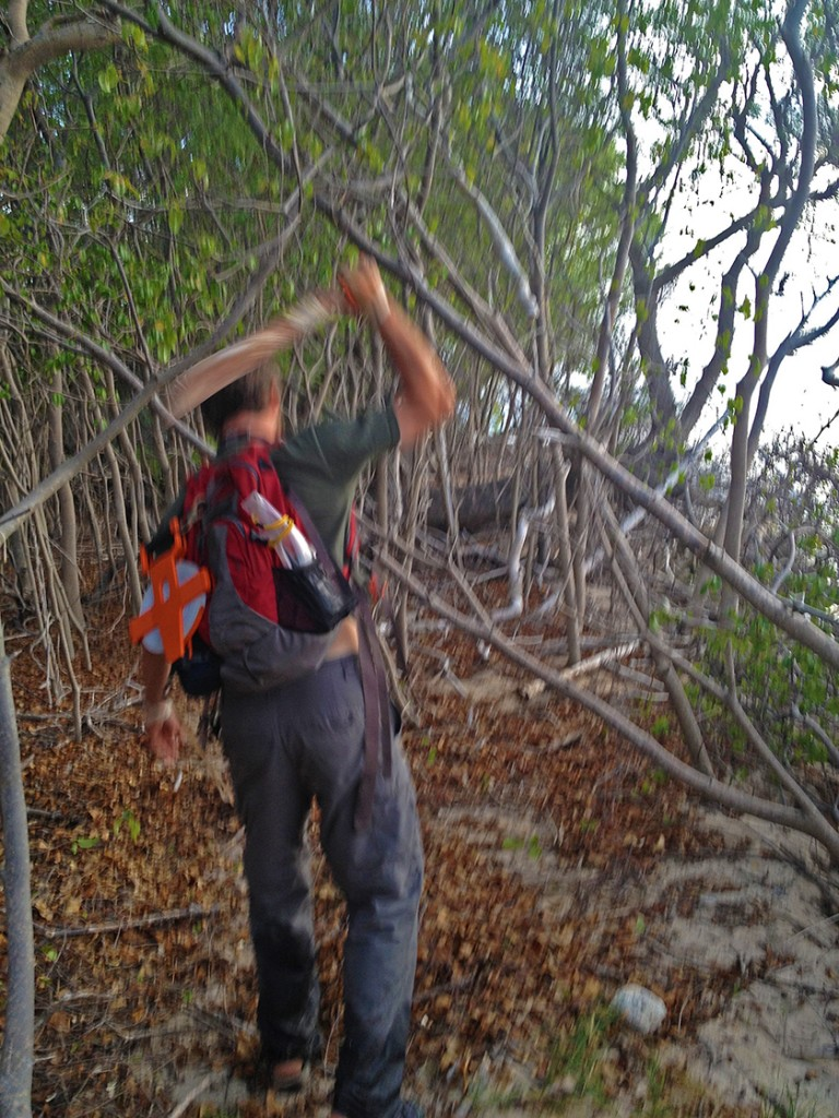While there is a relatively established trail further inland, the BISTRP crews must hug the water line looking for turtles. Clayton Pollock helps clear a trail through Buck Island's dense tropical bush. Imagine crawling through that in the middle of the night!