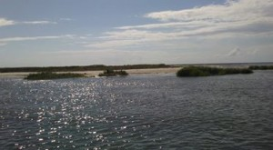 This is a small barrier island at which we released juvenile horseshoe crabs