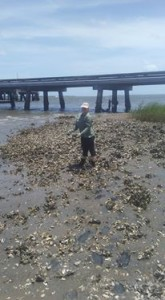 Collecting oysters for my roommate's research