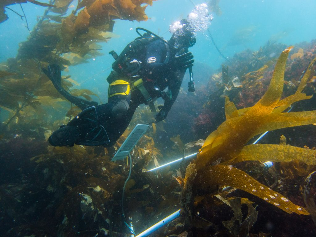 Dave Kushner motions for me to follow him into the kelp forest.