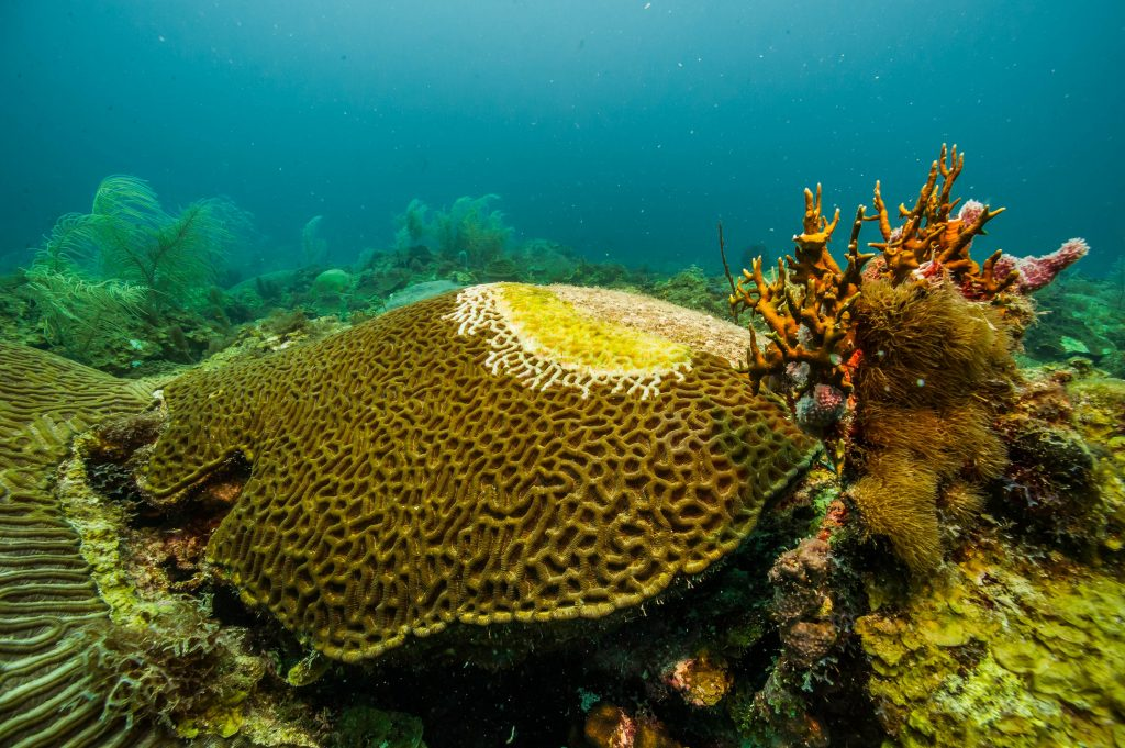 During the surveys, we are looking for coral diseases such as this.